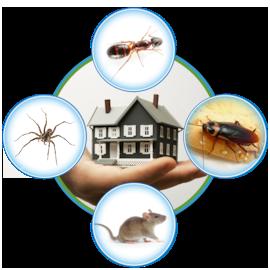 Pest-Control-Prevention